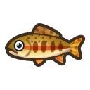 NH-Icon-goldentrout